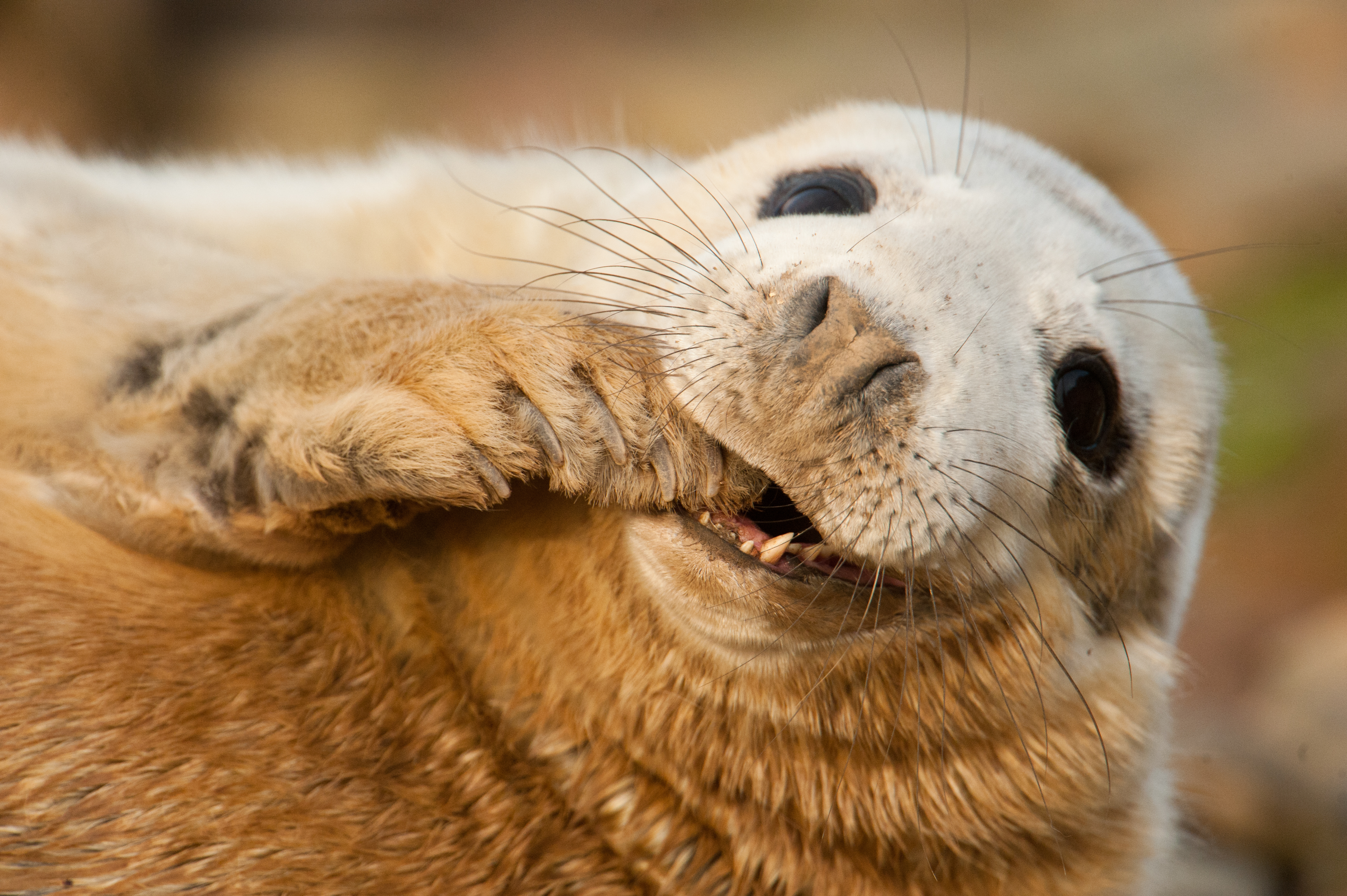 Tiere Schottland